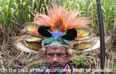 Birds of Paradise feathers in traditional ceremonial costume