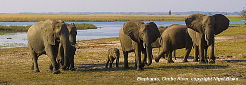 wildlife photo - elephants